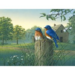 Bluebirds Tufttop Tempered Glass Kitchen Board 1